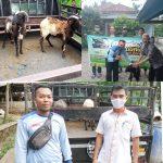 Lazismu Ciamis Salurkan Hewan Qurban Ke Beberapa Kecamatan di Kabupaten Ciamis