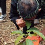 Bupati Ciamis Tanam Pohon di Nusa Gede Panjalu, Pelabelan Pohon Gunakan Barcode Berbasis Android