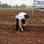 "Implementasikan ""Bagja Babarengan"" Wabup Ciamis Launching Demplot Penanaman Jagung Kristal"